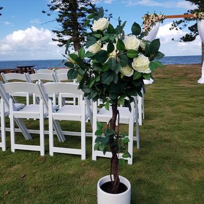 Rose Topiary 400 2