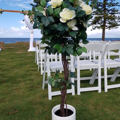 Rose Topiary tree